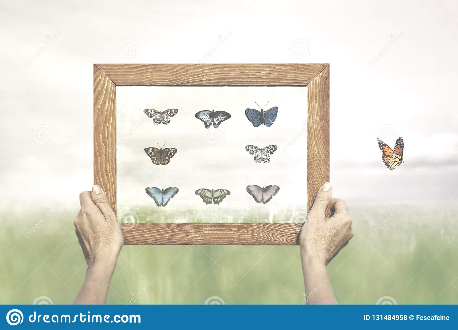Concept of freedom of a butterfly escaping from the painting of his collector