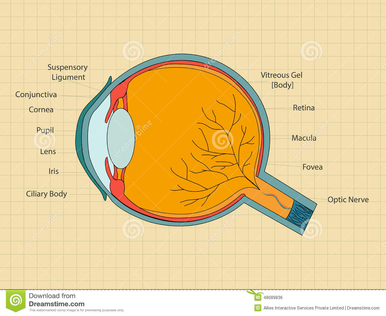 Concept of health and medical with human eye stock illustration concept of health and medical with human eye ccuart Image collections