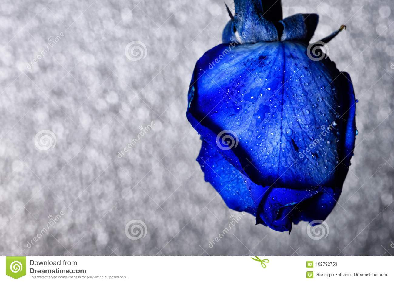 The concept of macro beauty of flowers cxxxxi stock image image of download the concept of macro beauty of flowers cxxxxi stock image image of decoration izmirmasajfo