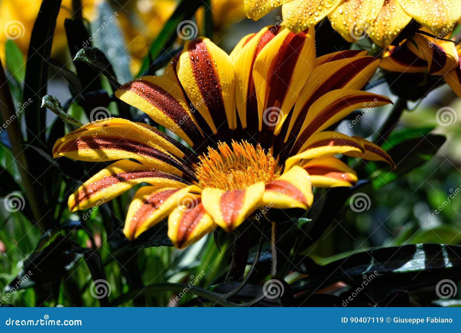 The concept of macro beauty of flowers xxxxiv stock image image of download the concept of macro beauty of flowers xxxxiv stock image image of color izmirmasajfo