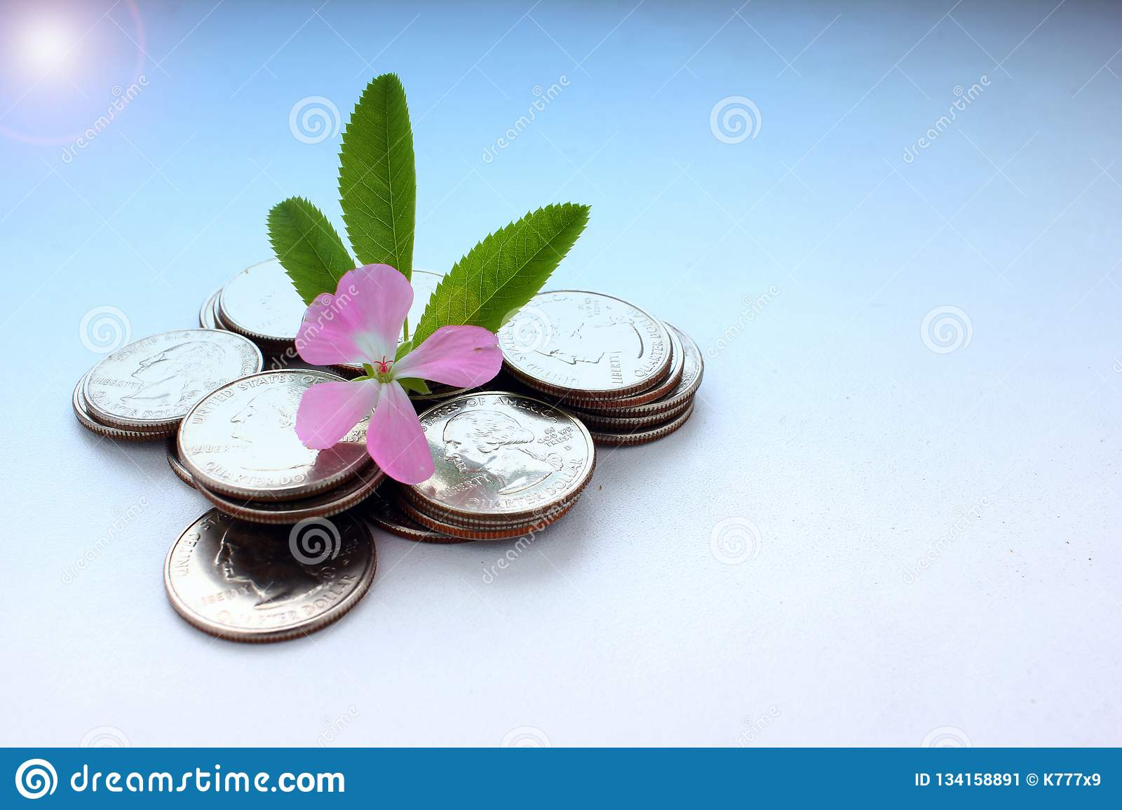 The concept of money growth, the success and prosperity of business as a flower growing at a fast pace, toned