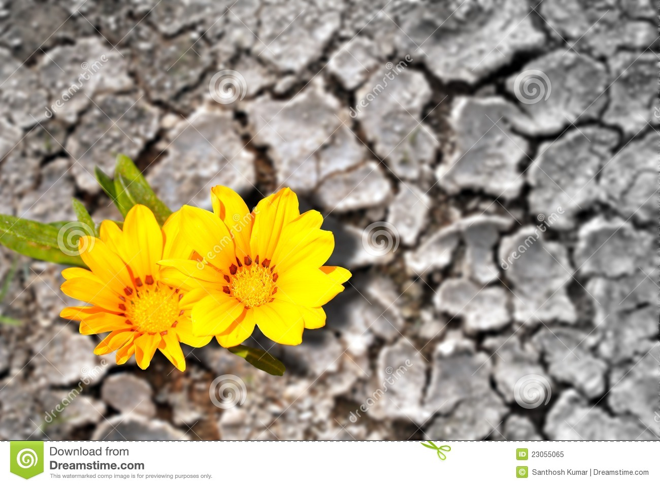Concept of persistence. Flowers in arid land
