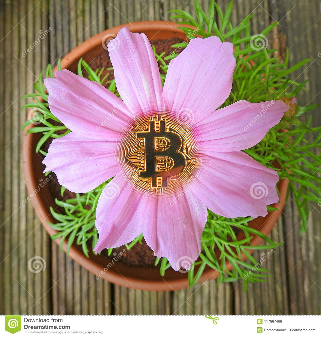 Bitcoins images of flowers schalke augsburg betting preview
