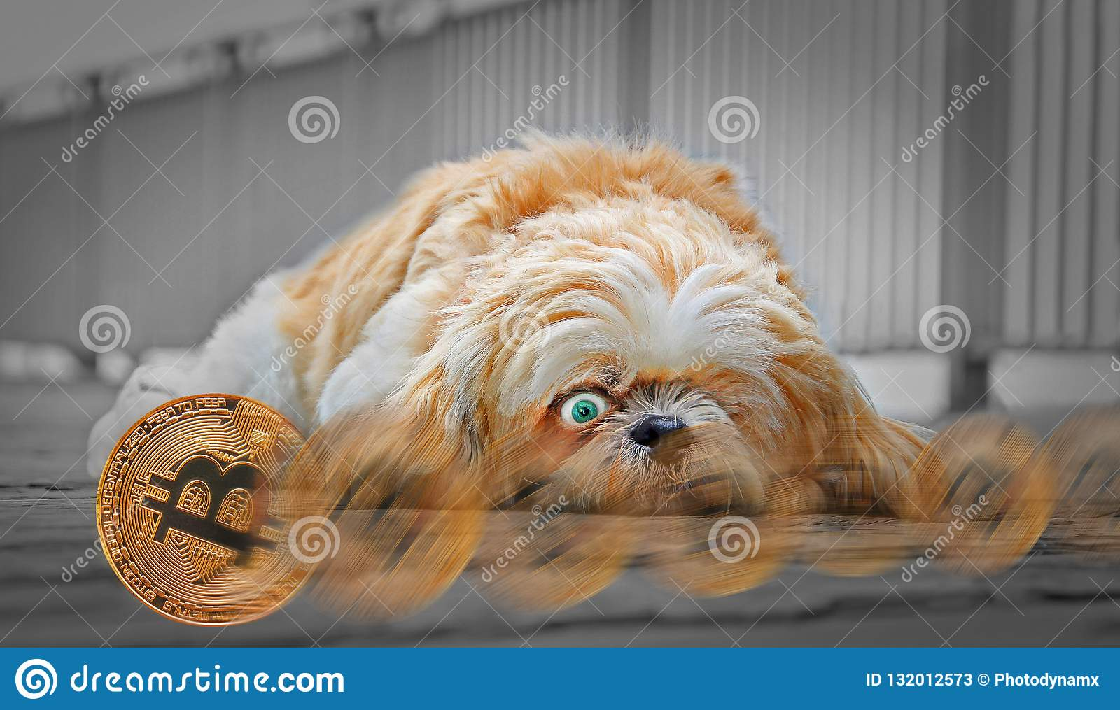 bitcoins pictures of dogs