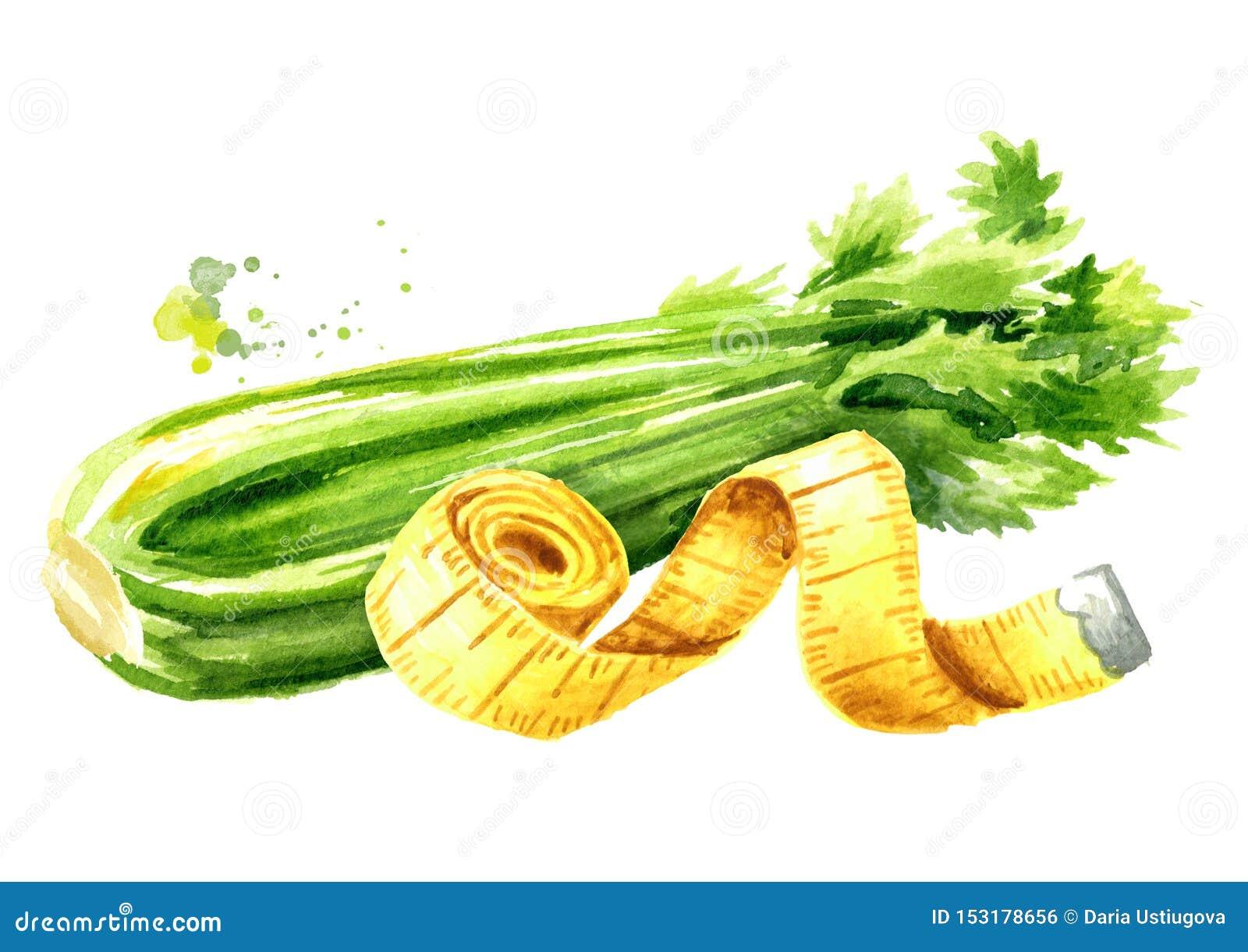 Conceptendieet Gezond voedsel met selderie en het meten van band Waterverfhand getrokken die illustratie op witte achtergrond wor