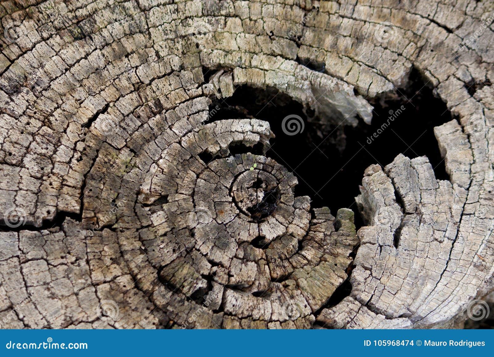 Conception circulaire sur le bois