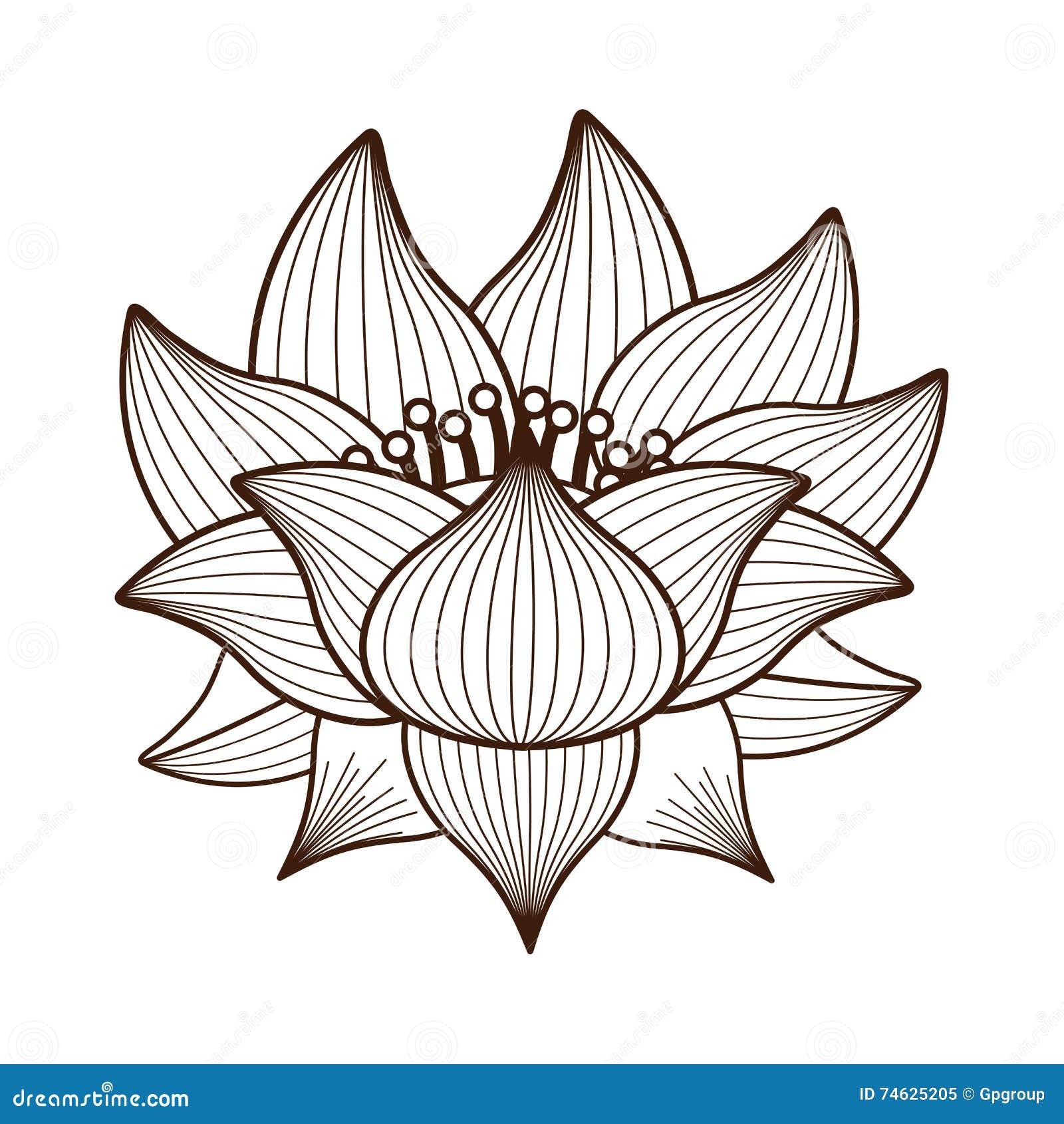 Conception D Icône D Isolement Par Dessin De Fleur De Lotus