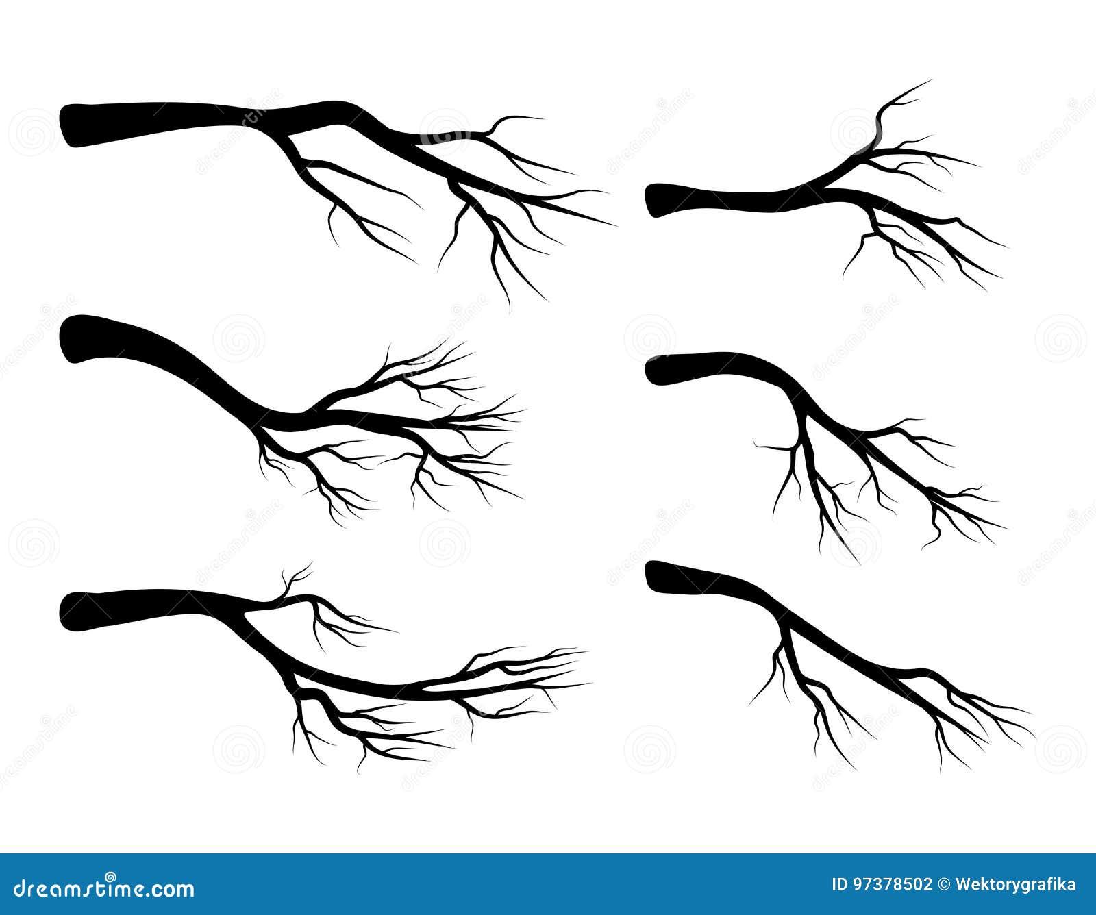 Conception réglée d icône de symbole de vecteur de branche nue