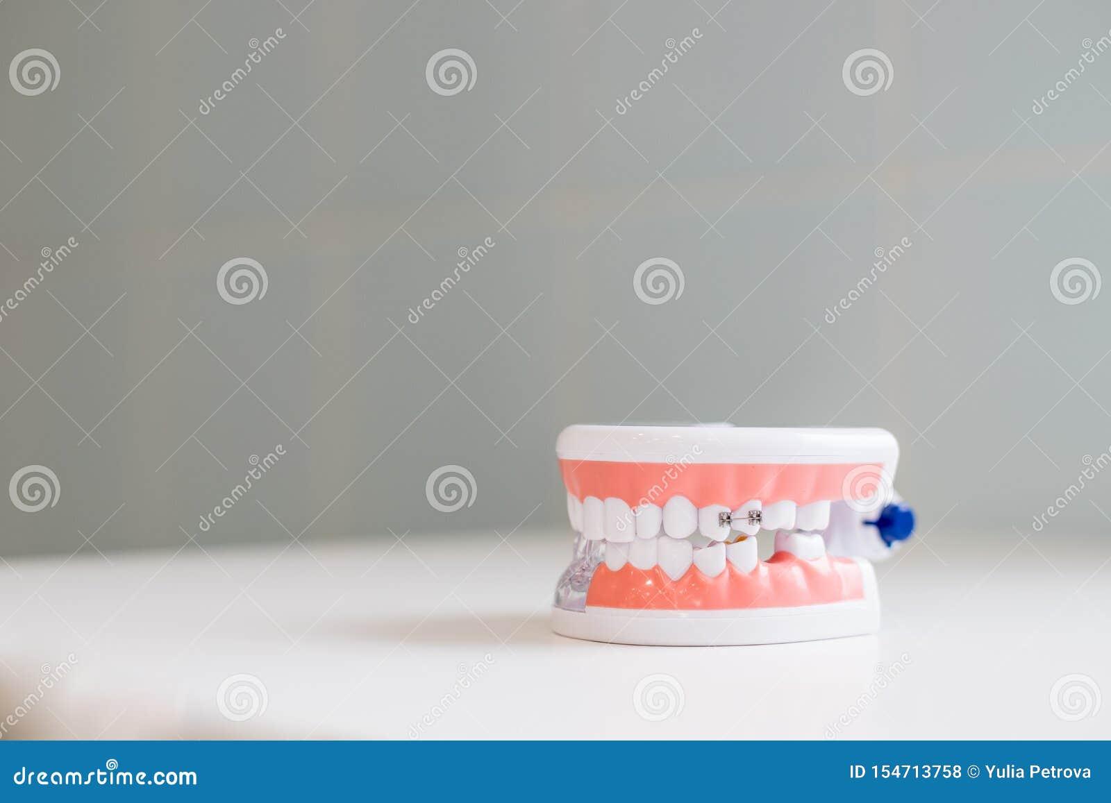 Concepto del chequeo del higienista dental Estudiante dental de la odontolog?a del diente que aprende los dientes modelo de ense?