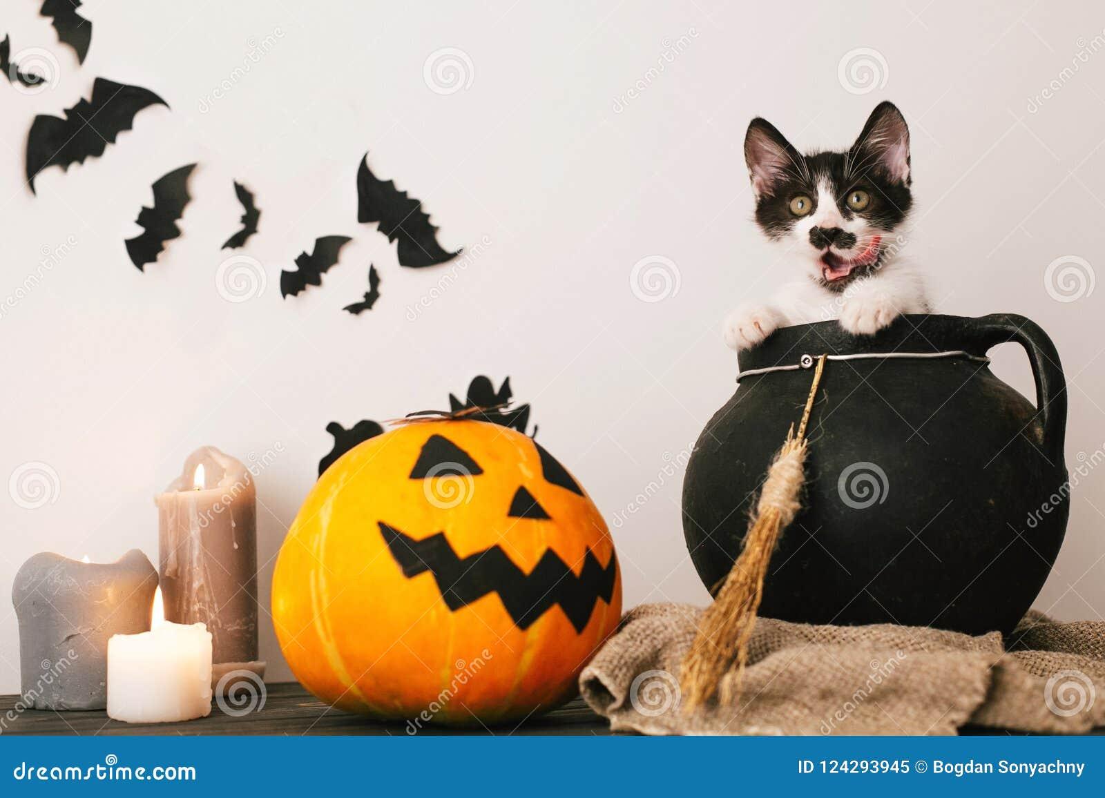 Concepto del feliz Halloween gatito lindo que se sienta en los wi de la caldera de la bruja