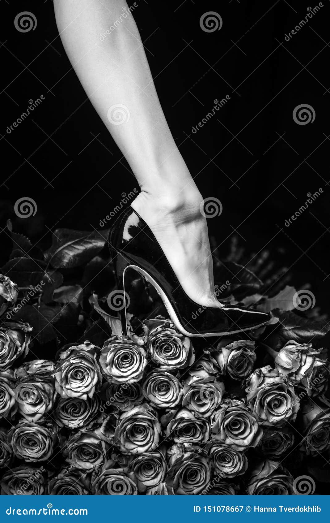 Concepto femenino de las piernas Zapatos negros y rosas negras Cuerpo hermoso de la mujer contra los pétalos de rosas negras con