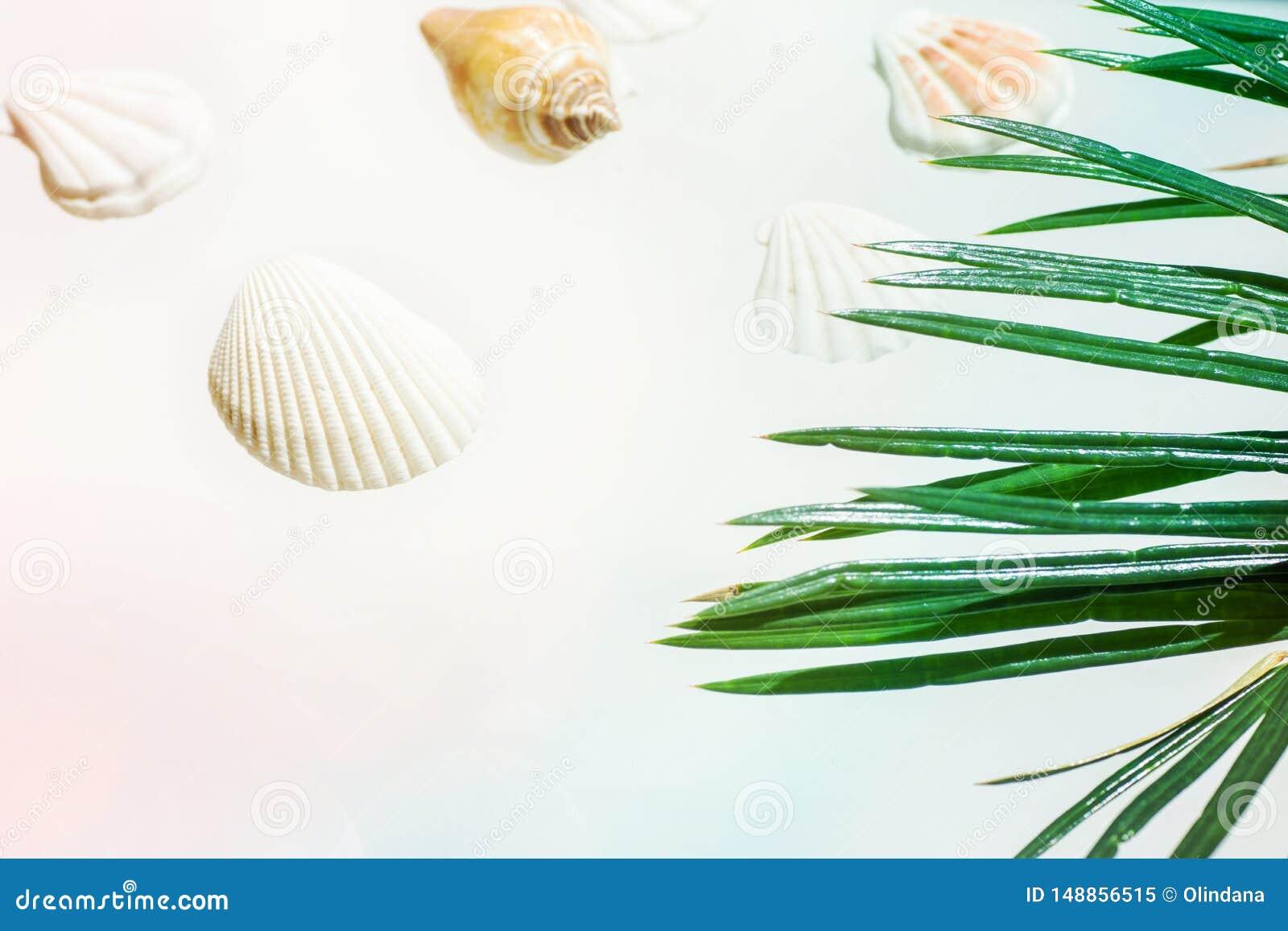 Concepto n?utico creativo del verano C?scaras hermosas del mar de diversas formas y de la hoja de palma verde de los colores en r