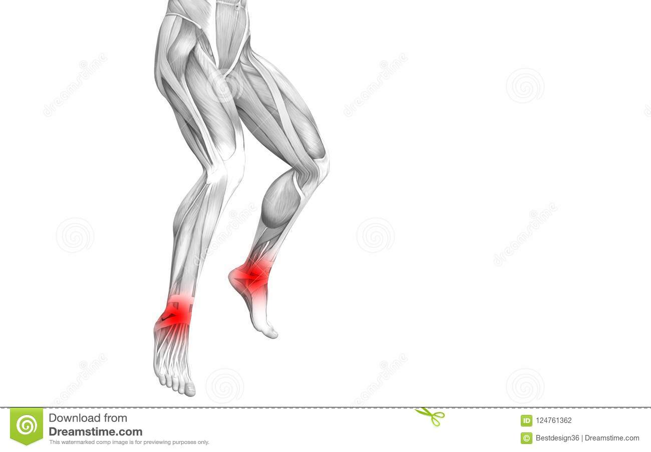 Ankle Human Anatomy Red Hot Spot Articular Joint Pain Stock ...