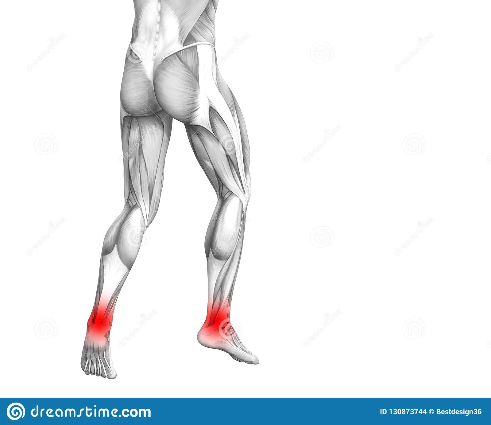 Ankle Human Anatomy With Articular Joint Pain Stock Illustration