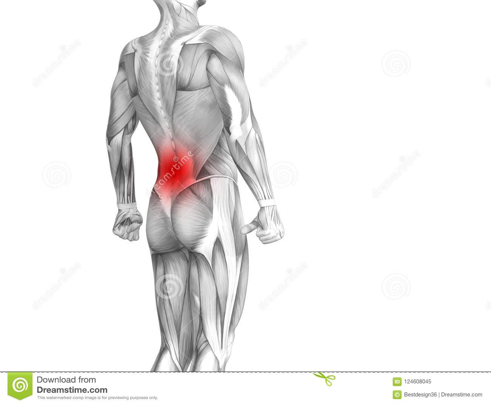 Back Human Anatomy Red Hot Spot Inflammation Stock Illustration