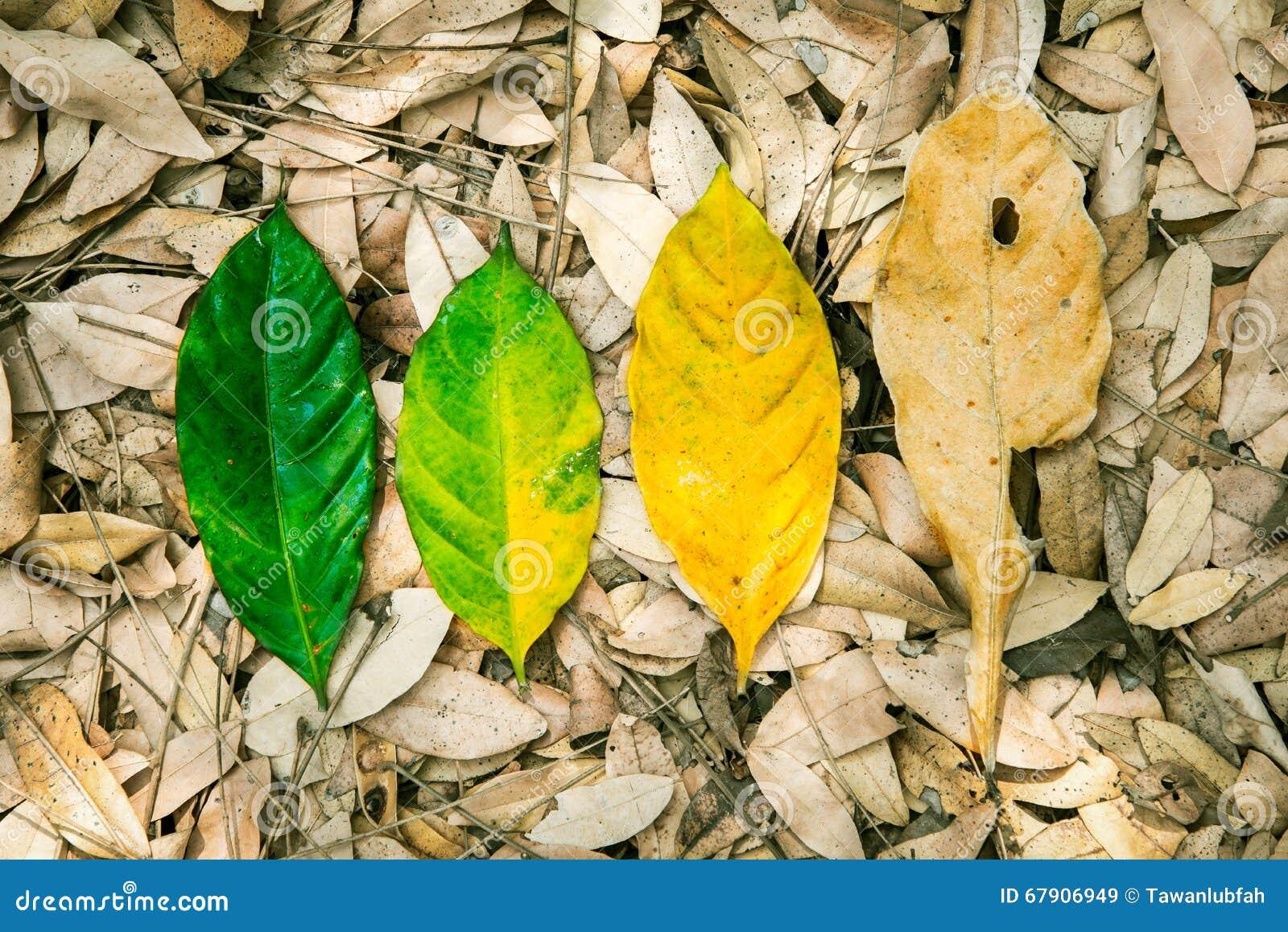 Conceptual da vida, do ciclo do nascimento e da morte Folha fresca da natureza