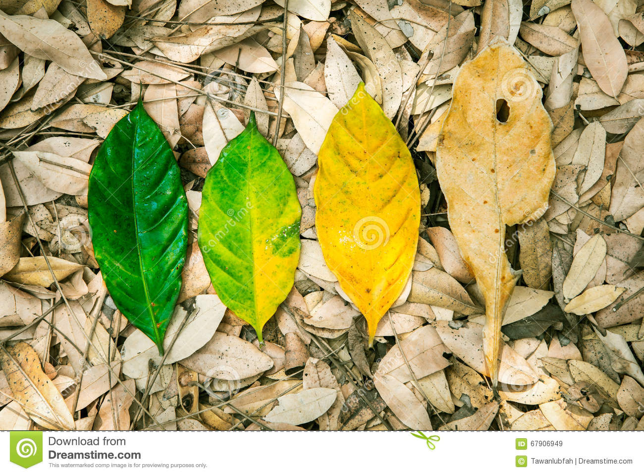 Conceptual of life, cycle of birth and death. Nature fresh leaf
