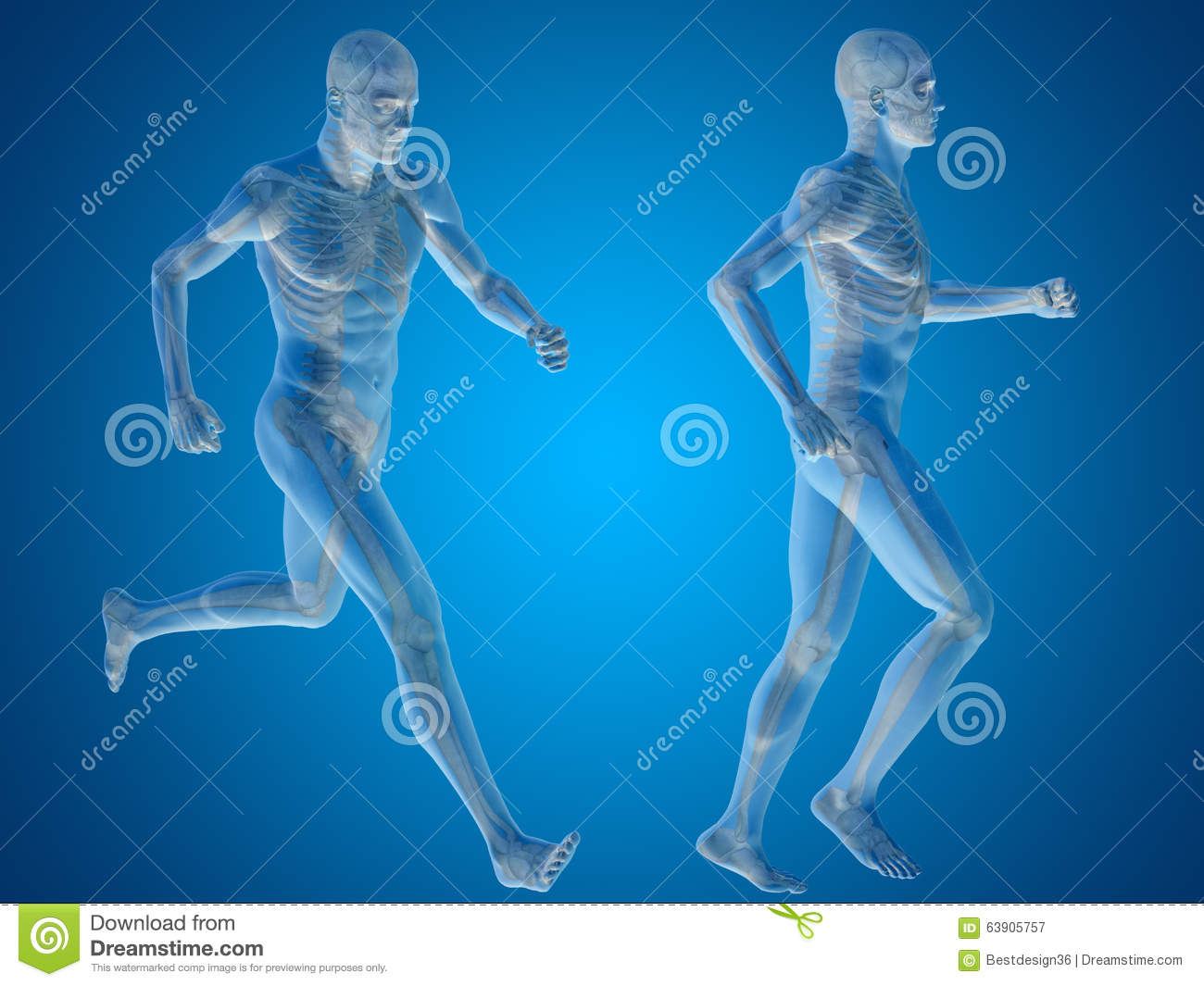 Conceptual Man Or Human 3D Anatomy Or Body On Blue Stock ...