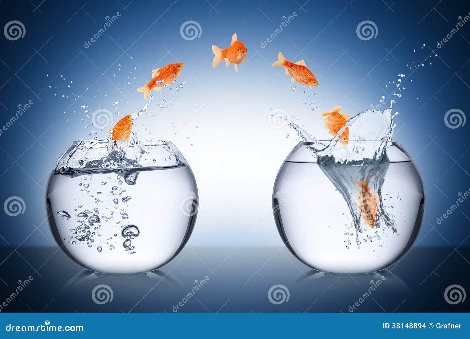Concetto del cambiamento del pesce