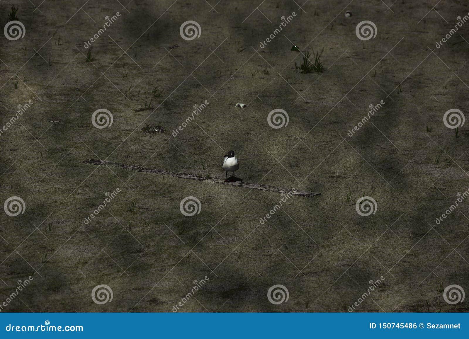 Concetto del gabbiano invaso dell inquinamento ambientale di ecologia su uno stagno sporco