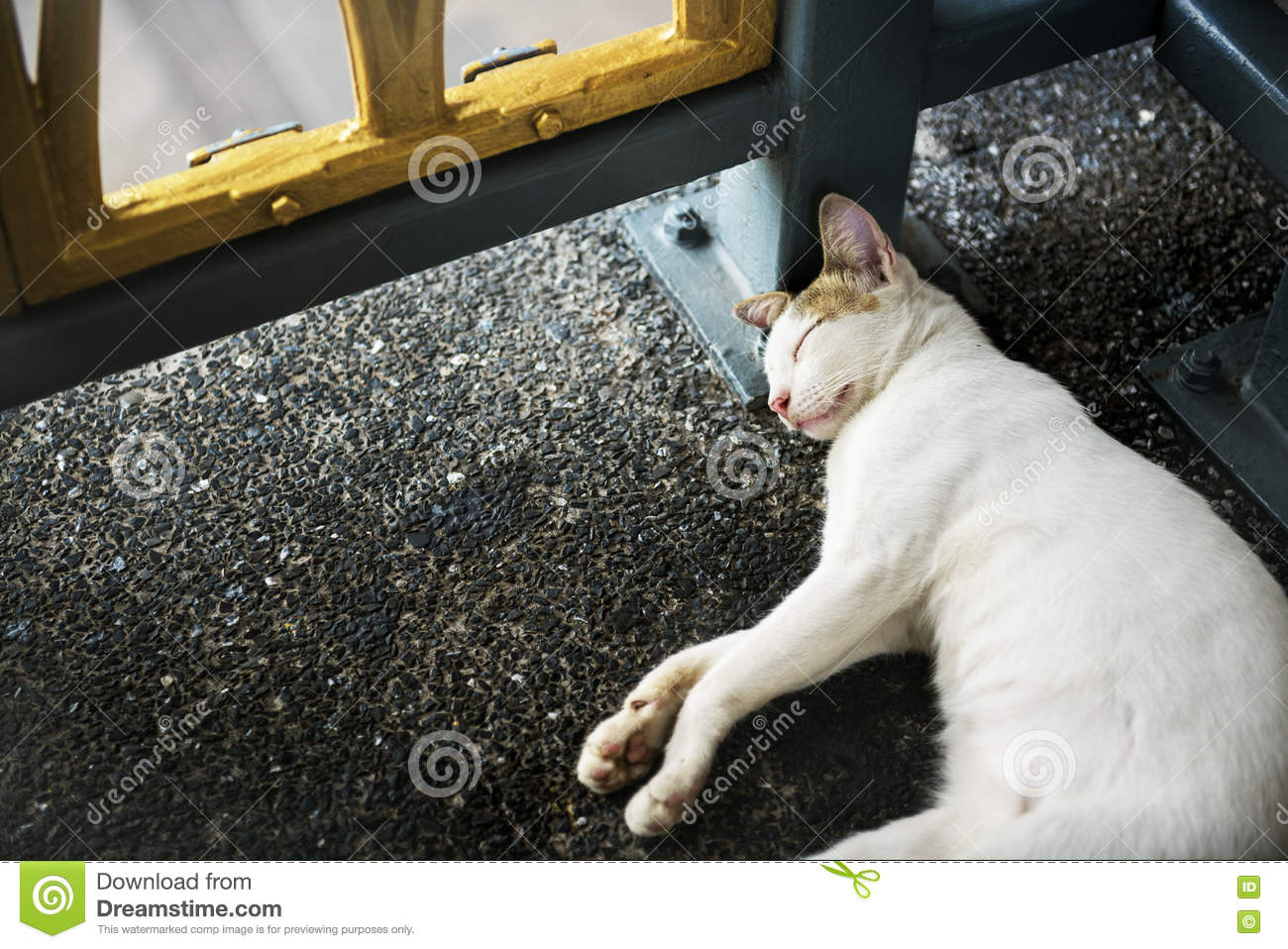 Concetto di Cat Kitten Sleeping Footpath Roadside Animal