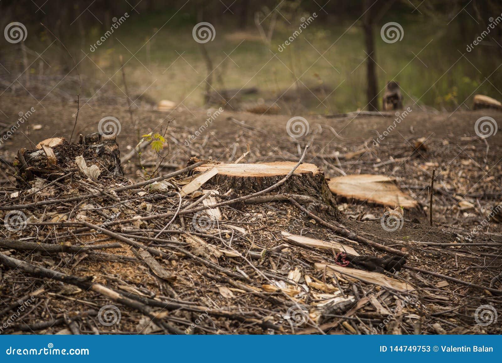 Concetto di disboscamento e dell ambiente
