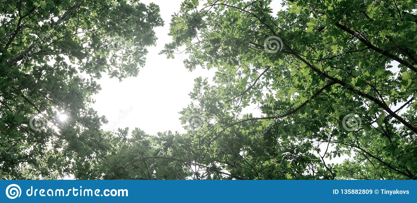 Concetto ecologico del trasporto aereo L aereo vola nel cielo contro lo sfondo degli alberi verdi Inquinamento ambientale