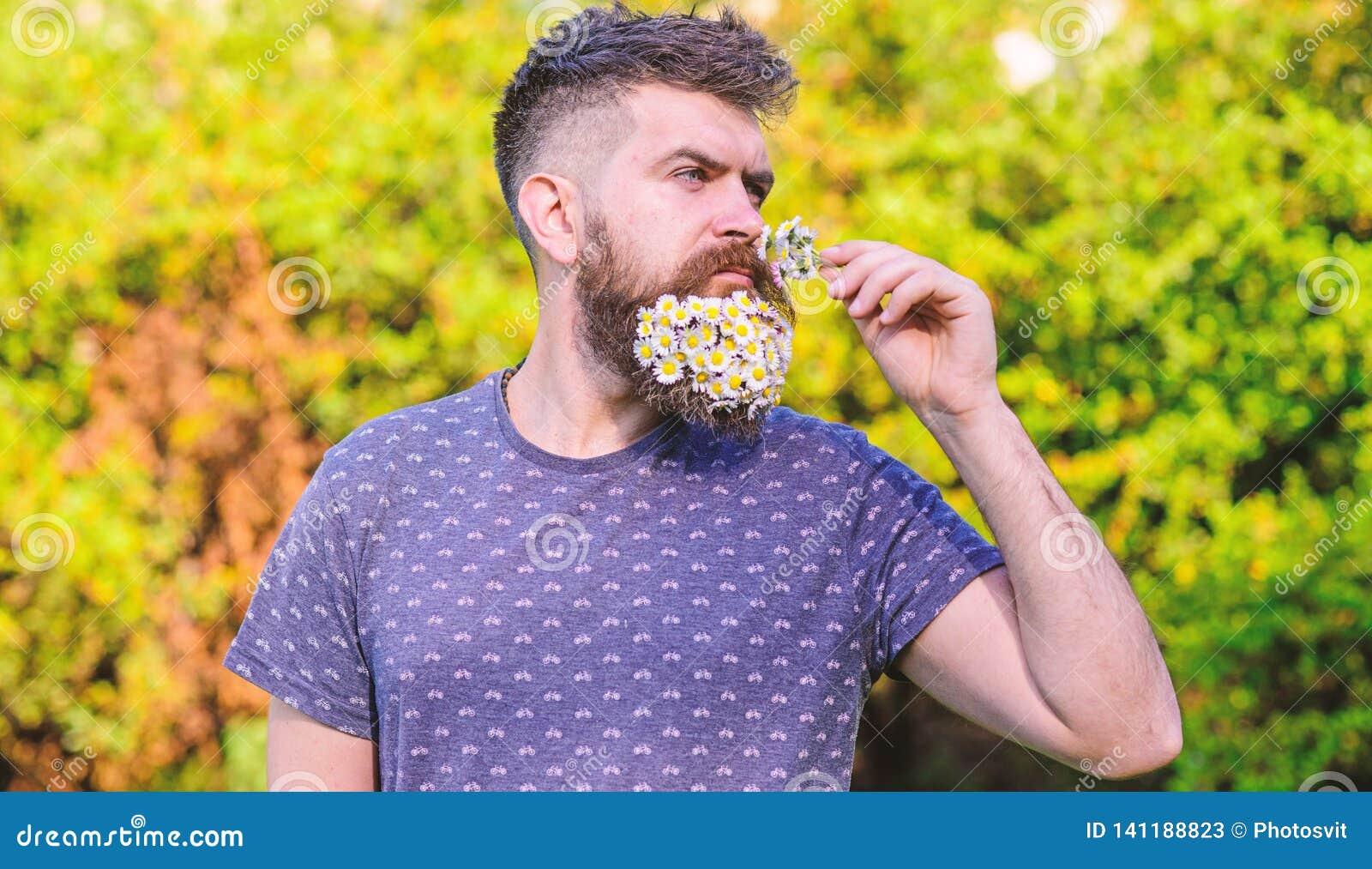 Concetto naturale dell aroma Pantaloni a vita bassa con il mazzo delle margherite in barba L uomo con la barba ed i baffi sul fro