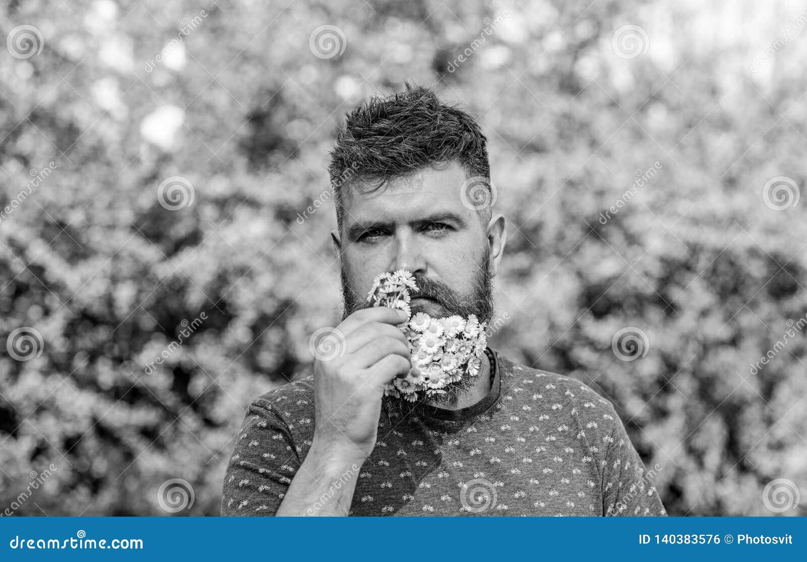 Concetto naturale dell aroma Uomo barbuto con i fiori della margherita in barba L uomo con la barba ed i baffi sul fronte rigoros