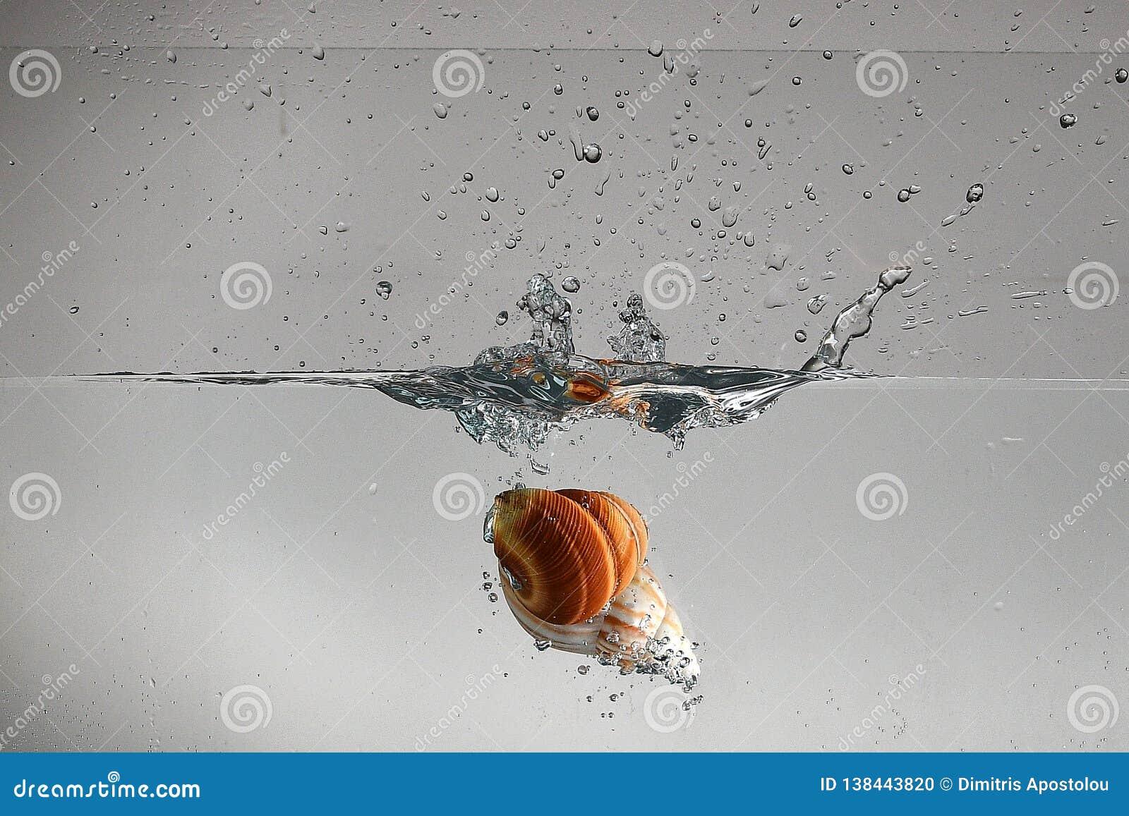 Concha marina que cae en la fabricación del agua