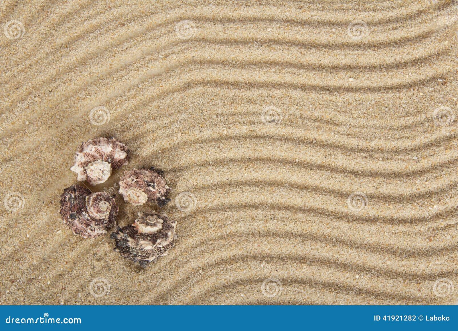Conchas de berberecho del mar en la arena