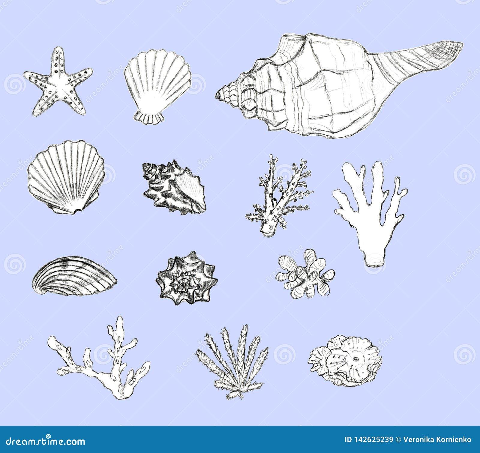 Conchas do mar tiradas mão e corais ajustados no fundo azul