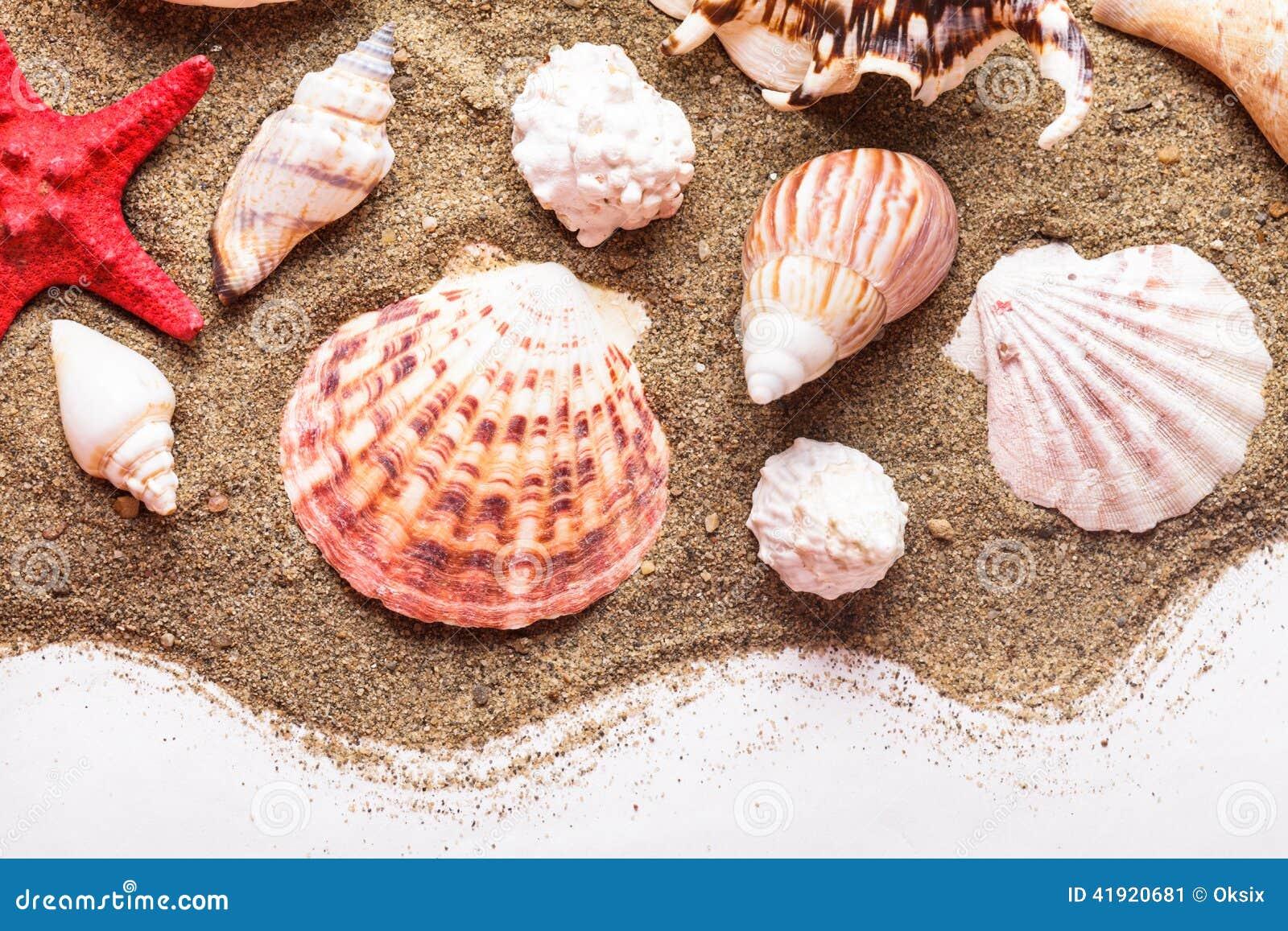Conchas marinas en la arena