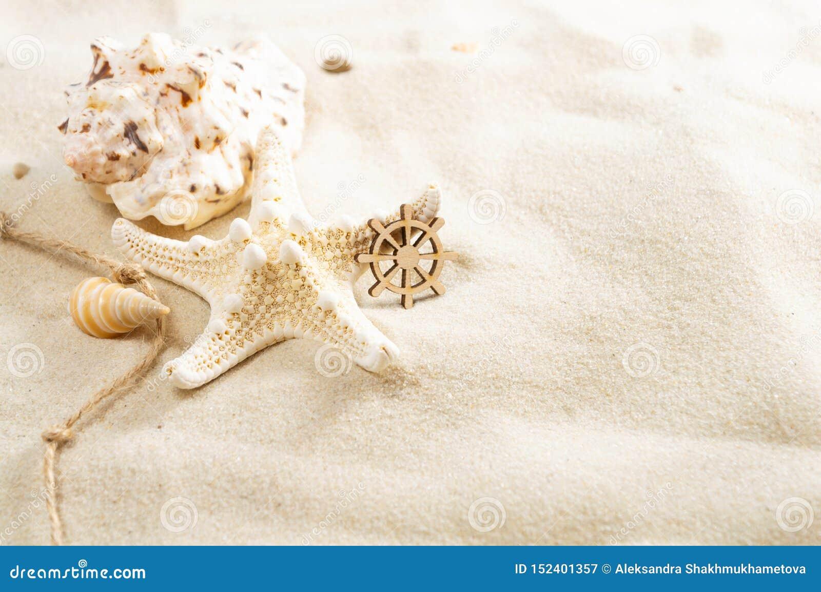 Conchas marinas en la arena con el espacio de la copia Concepto del d?a de fiesta de la playa del verano
