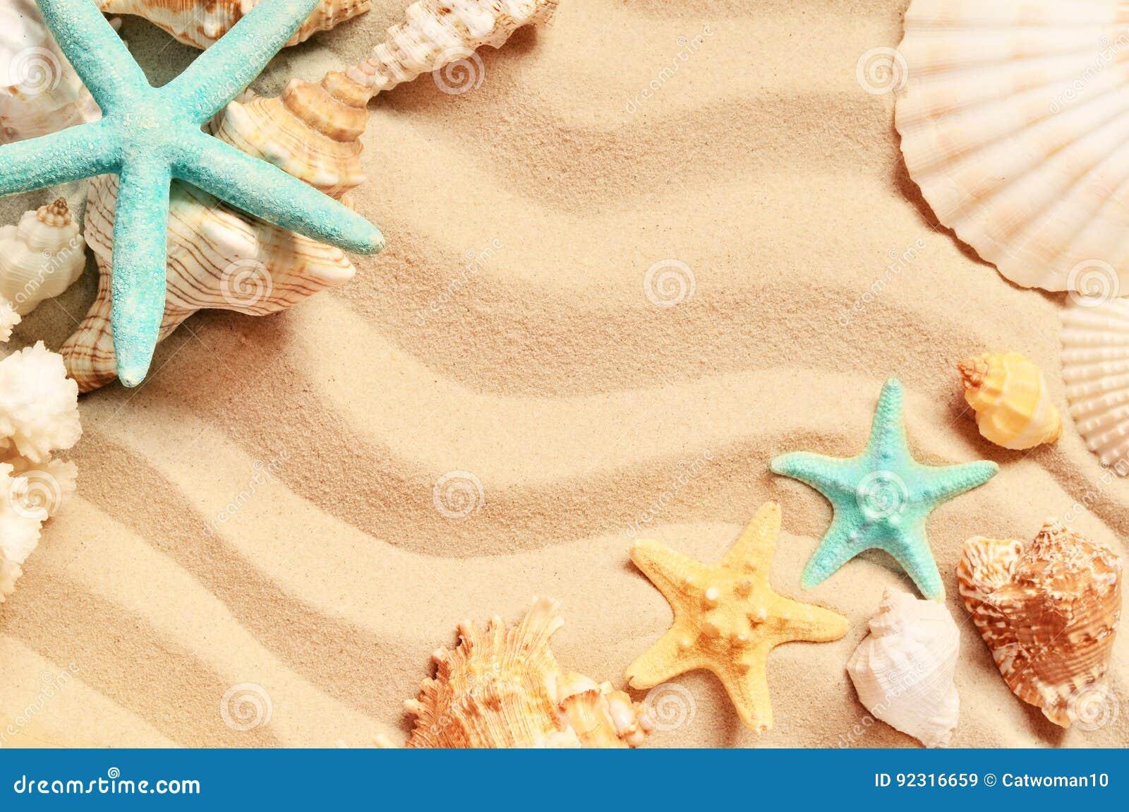 Conchas marinas en una playa y una arena del verano como fondo Shelles del mar