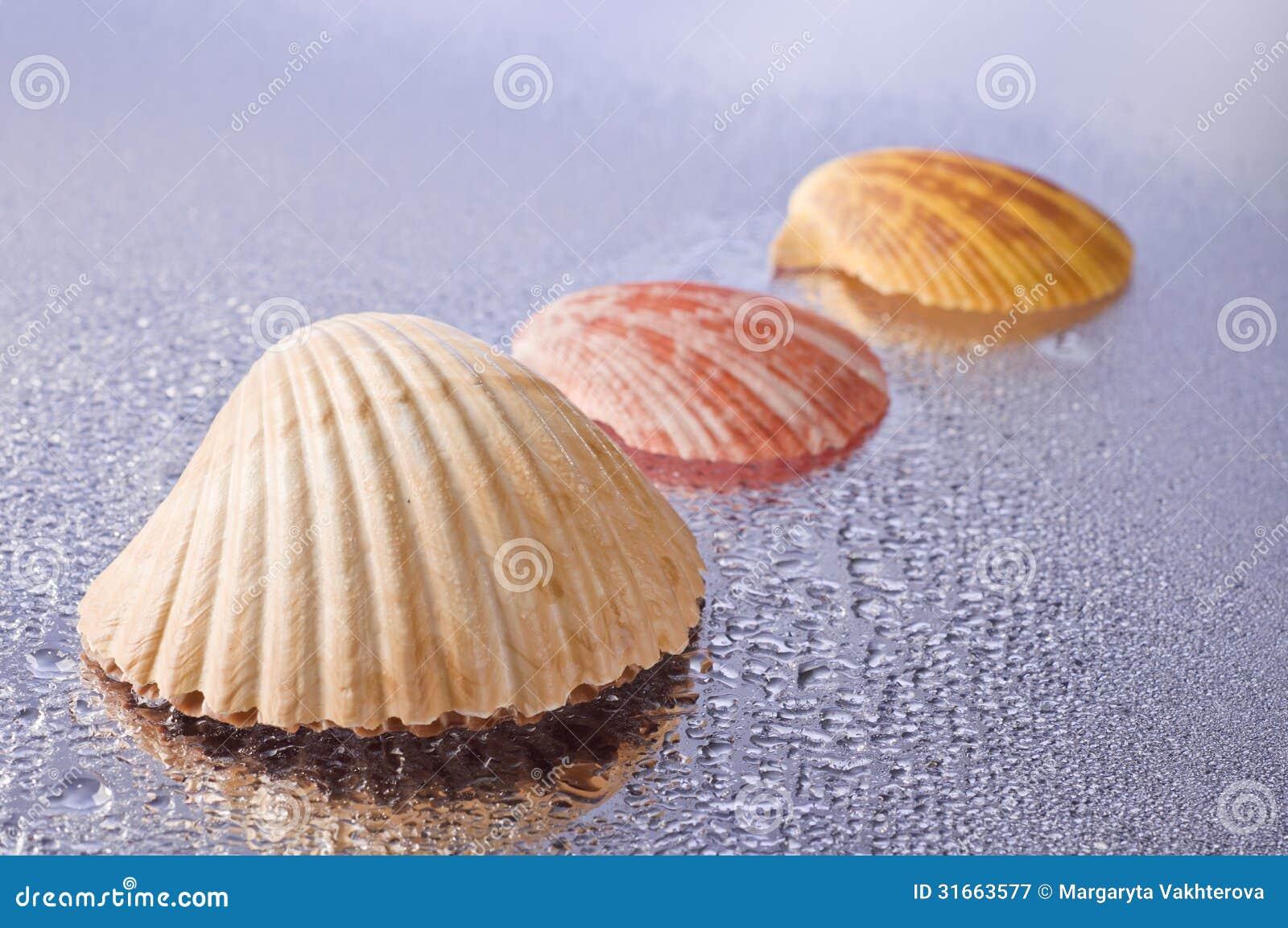 Conchas mojadas