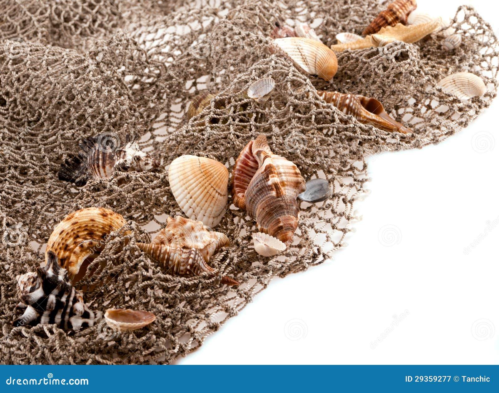 Conchiglie e stelle marine sulla rete di pesca immagine - Rete da pesca per decorazioni ...