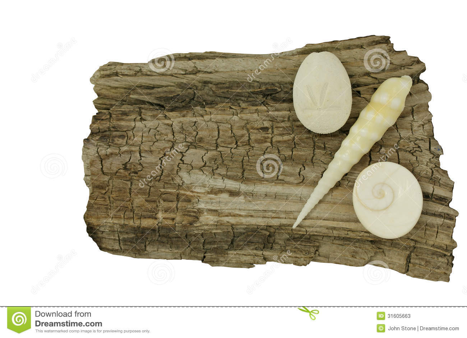 Conchiglie su legname galleggiante