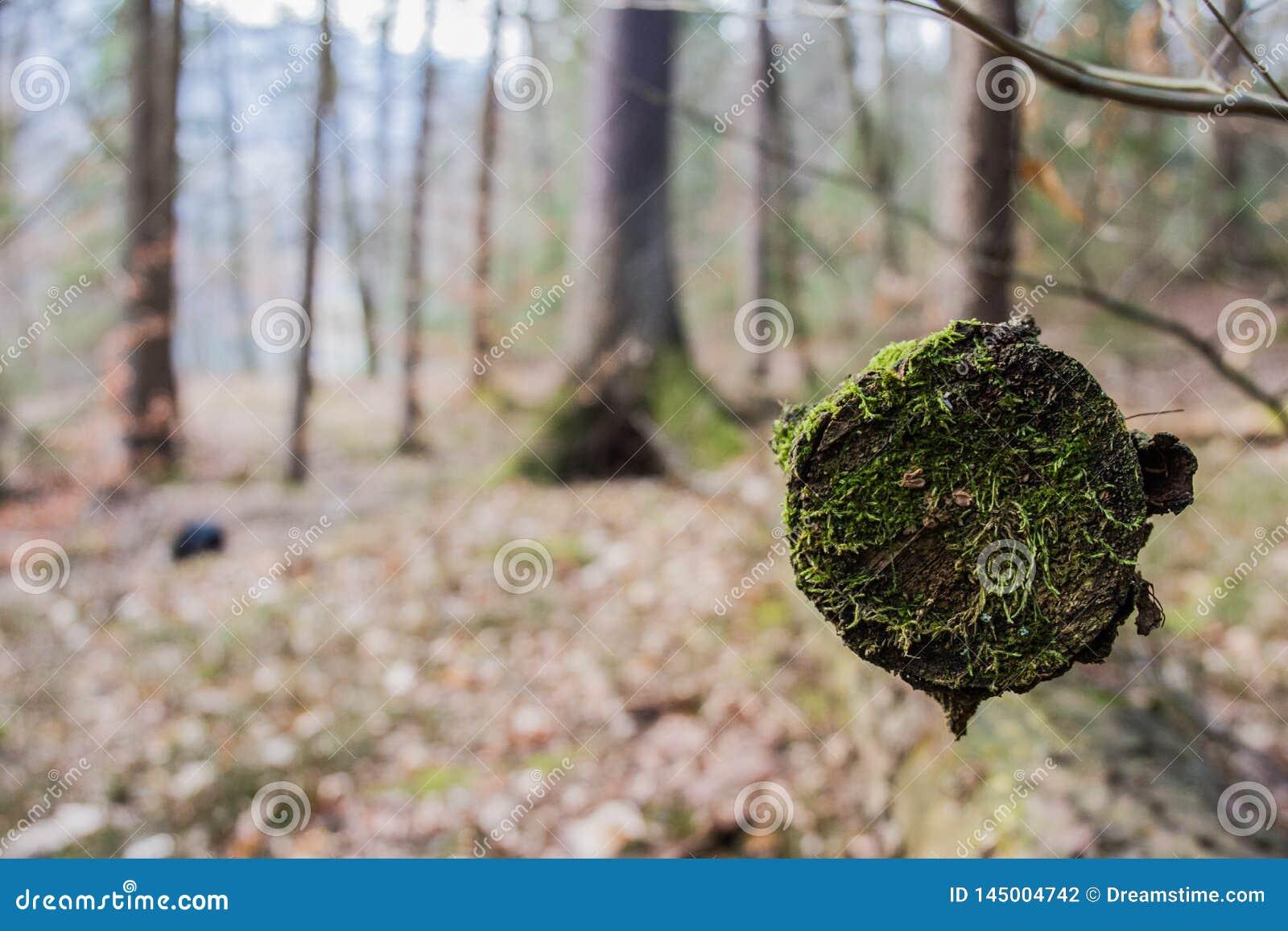 Conclusione dell inverno in foresta