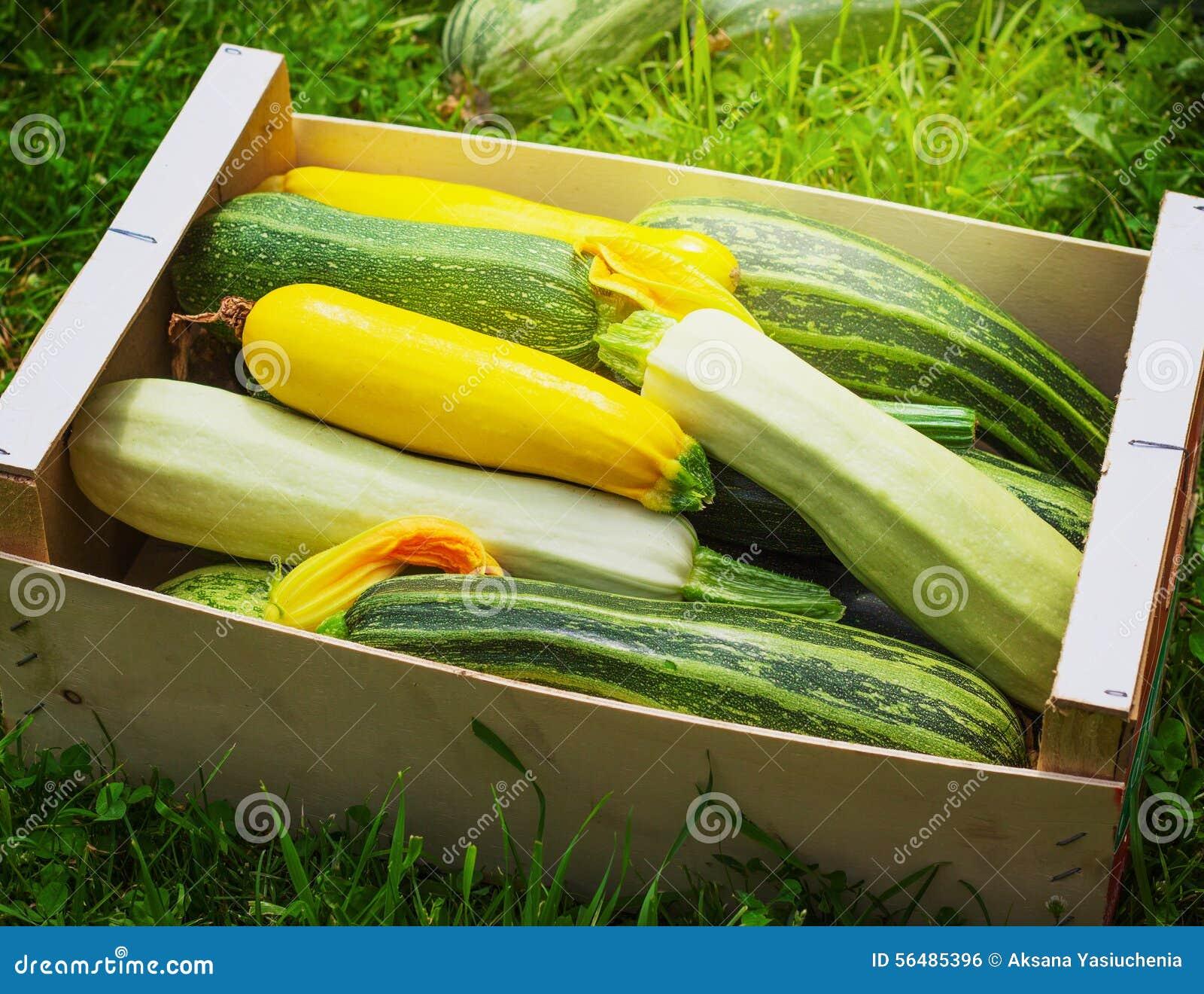 Concombre vert sain frais de courgettes de courgette