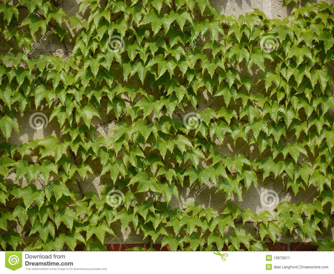 Concrete Block Wall Overgrown With Ivy Stock Image Image