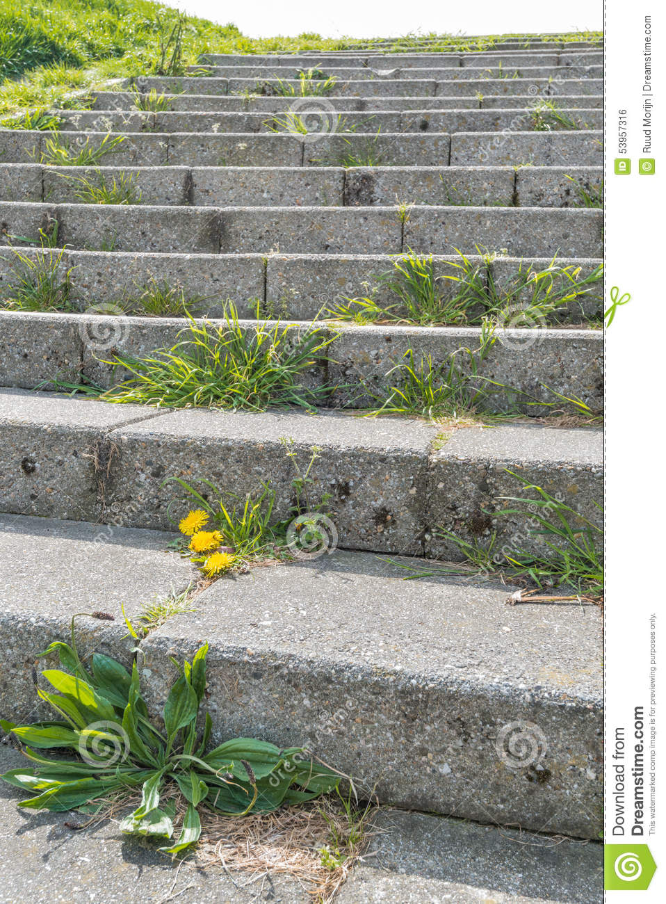Concrete Stairway With Different Types Of Weeds On The