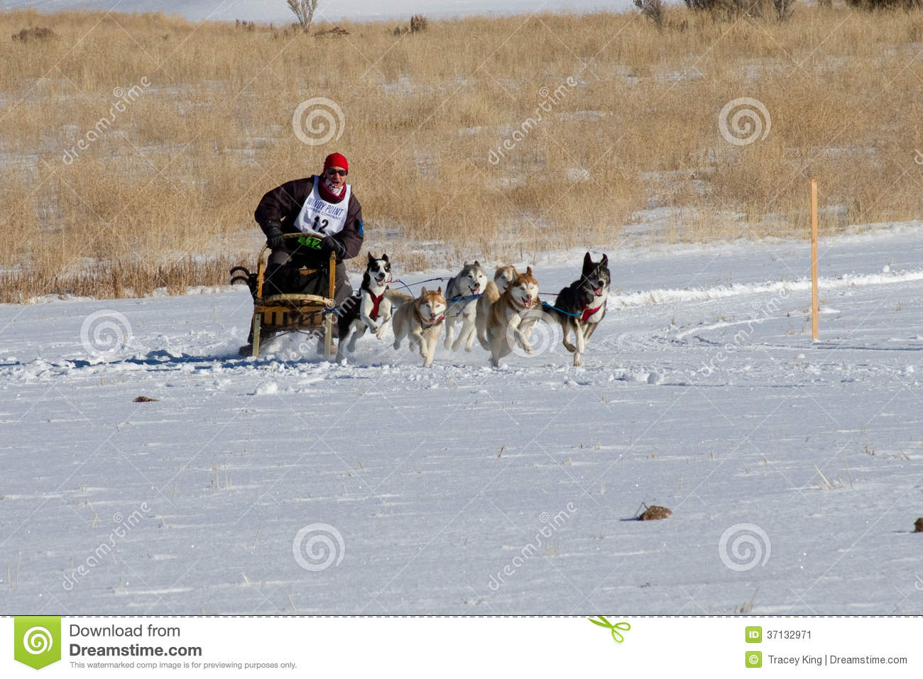 Concurrent de Rocky Mountain Sled Dog Championships