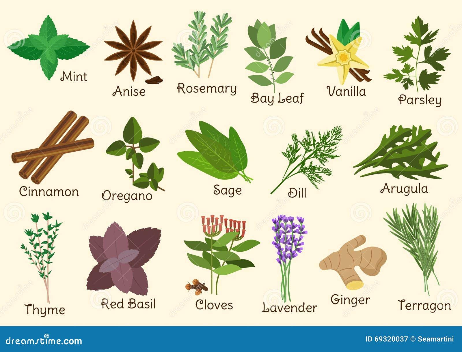 Condiment herbes et pices de cuisine illustration de vecteur image 69320037 - Herbes aromatiques cuisine liste ...
