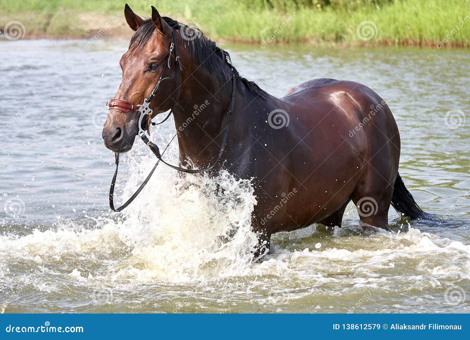 Condizione del cavallo in un acqua
