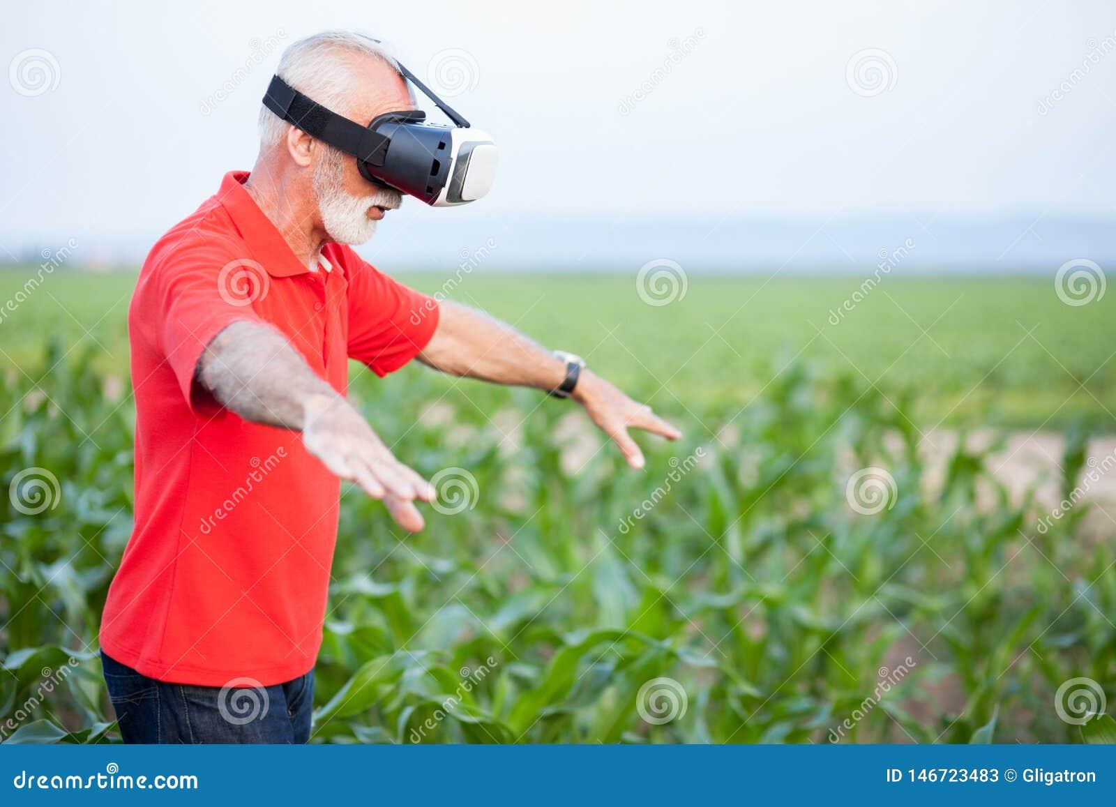 Condizione senior dell agricoltore o dell agronomo nel campo di grano ed usando gli occhiali di protezione di VR