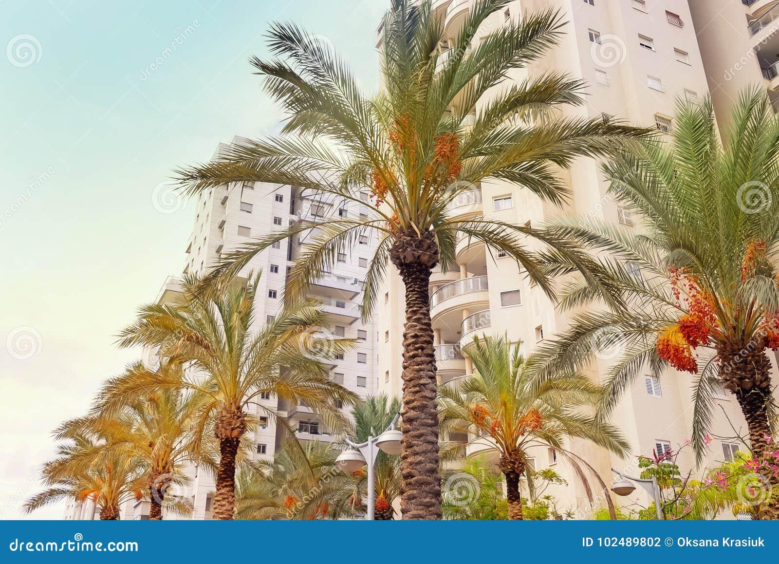 Condomini moderni pronti per lo stabilimento con le palme da datteri Paesaggio urbano contemporaneo Edificio della Camera e costr