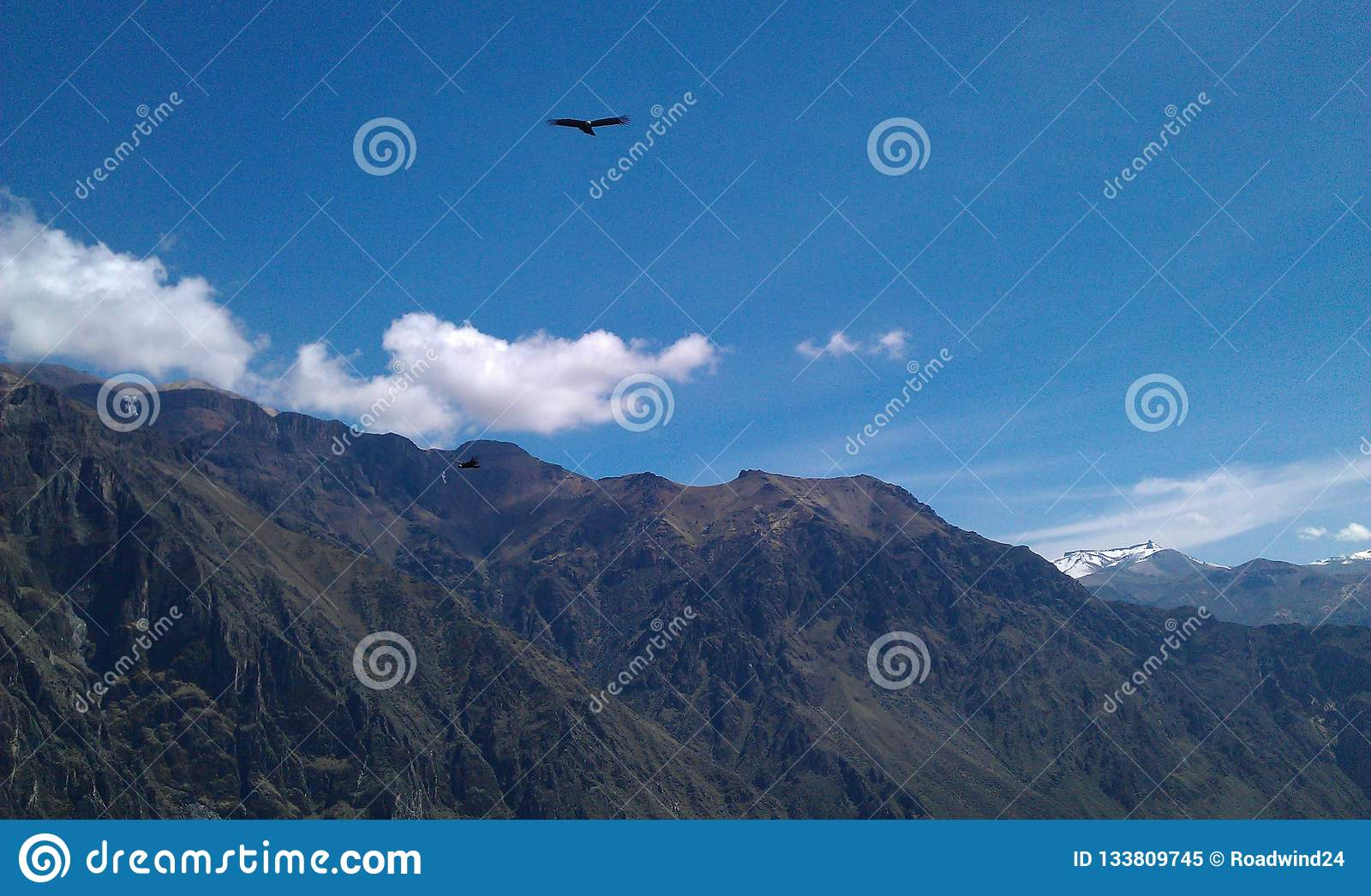 Condor flying above mountains