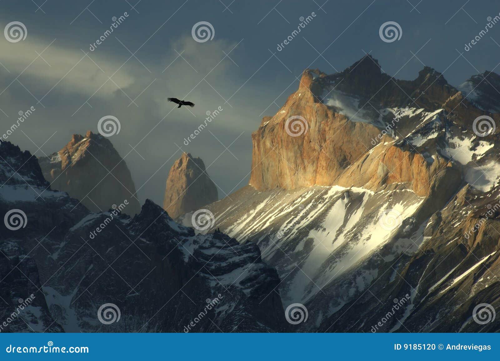 Condor a Torres del Paine, Cile