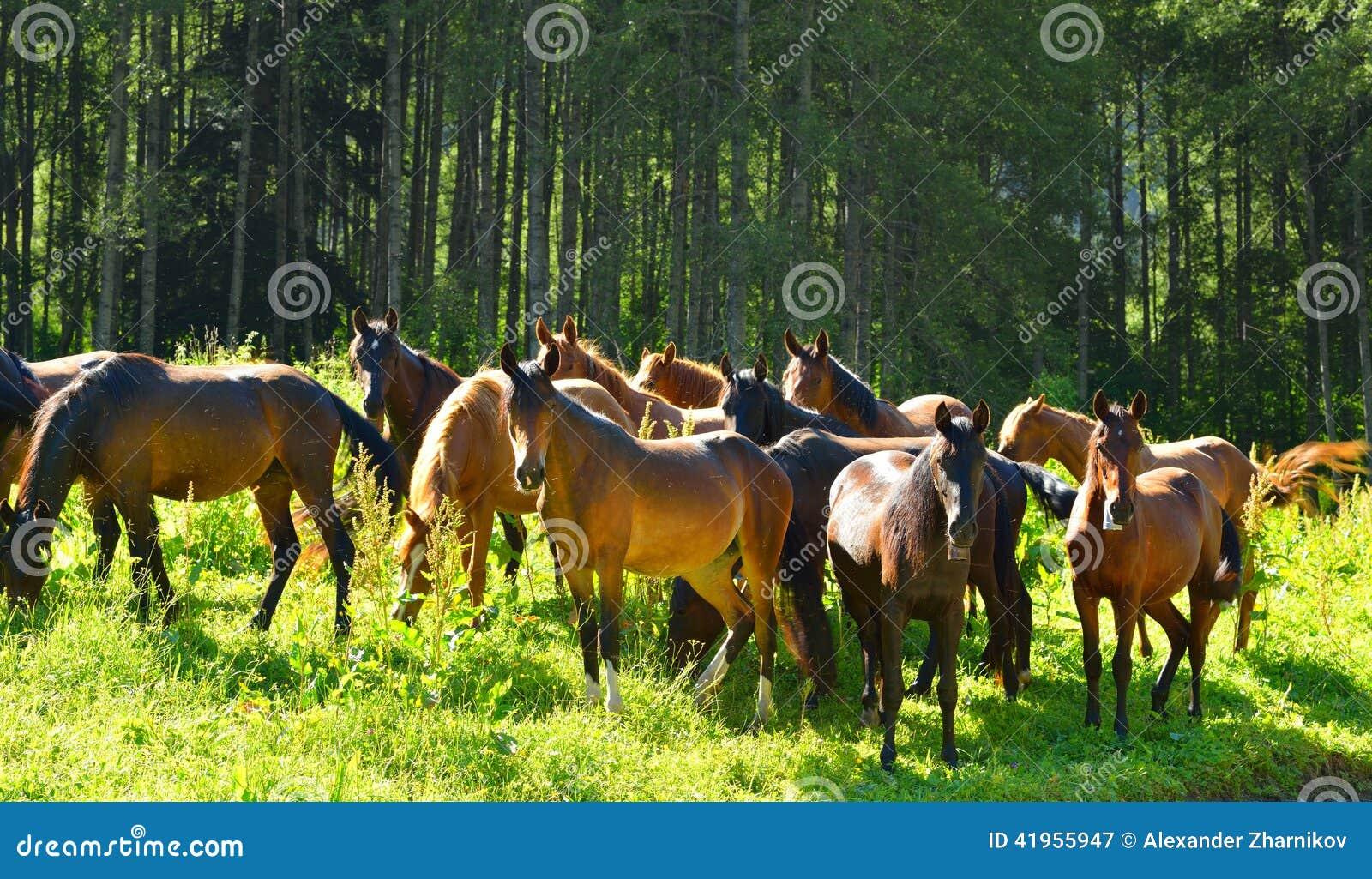 Condujo de caballo
